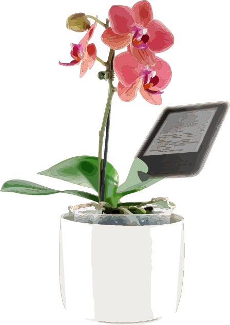 Orchidee mit Kindle - von Dierk Haasis