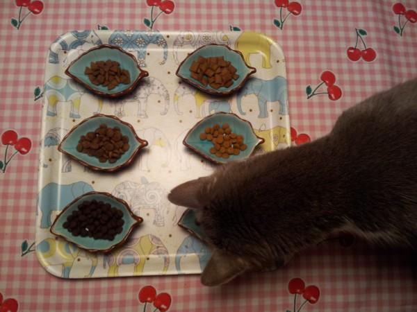 Katzenfuttertest