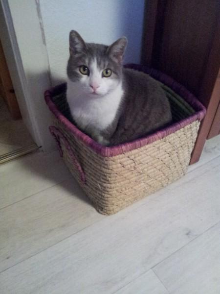 Louie im überteuerten Rice-Korb