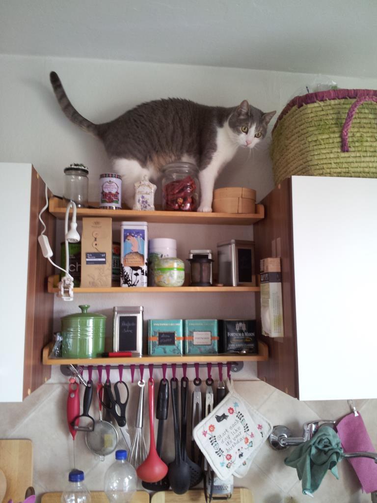 Louie auf dem Oberschrank