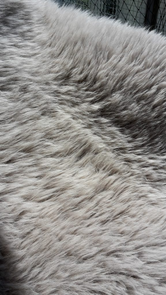 Graues Lammfell, frisch aufgebürstet