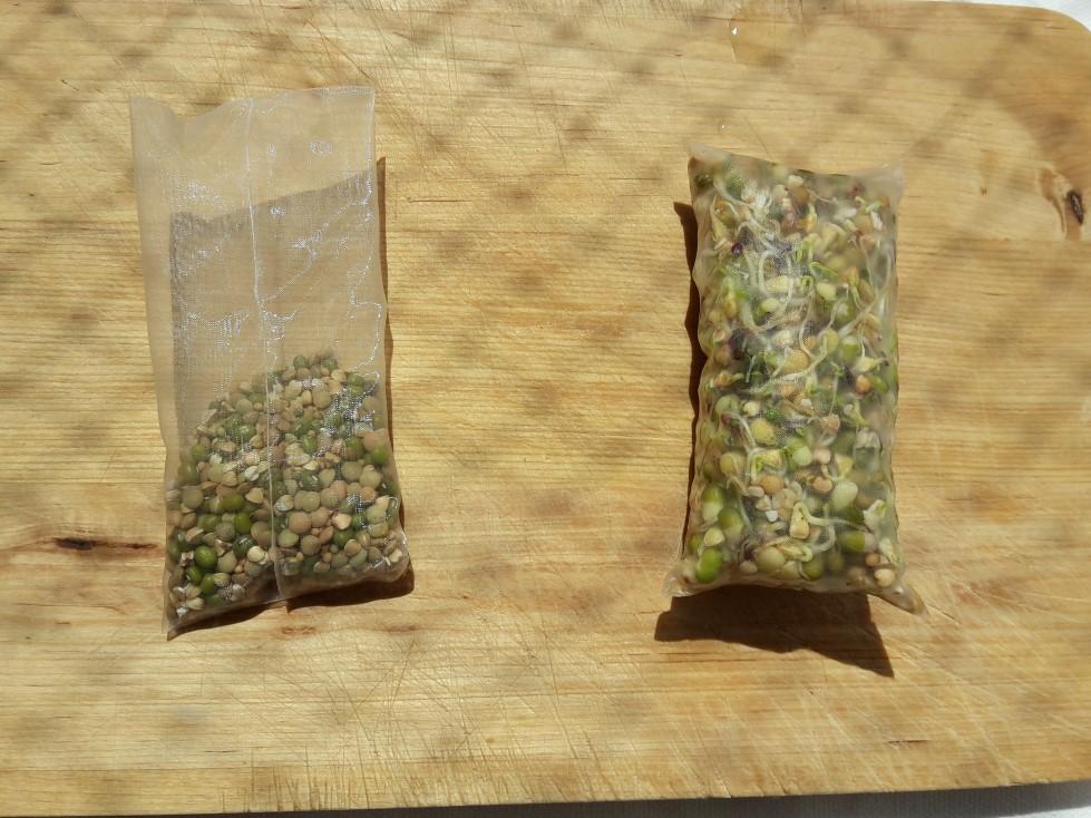 Samen und Sprossen im Beutel