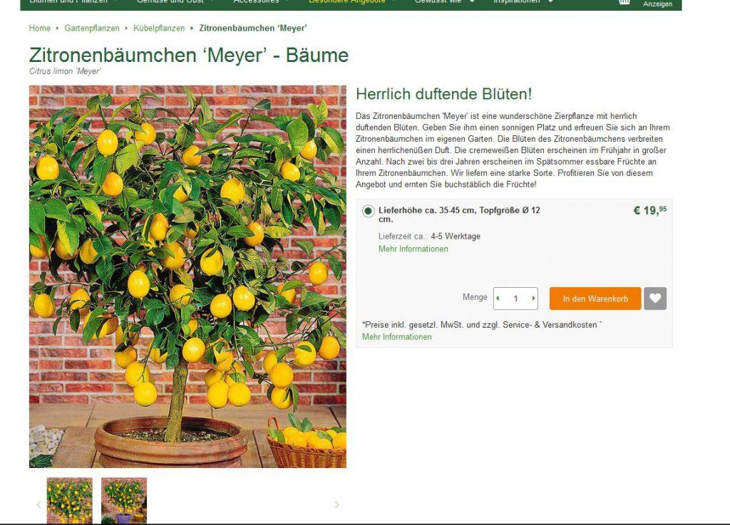 Bild Webshop bakker.com: Zitronenbäumchen Meyer