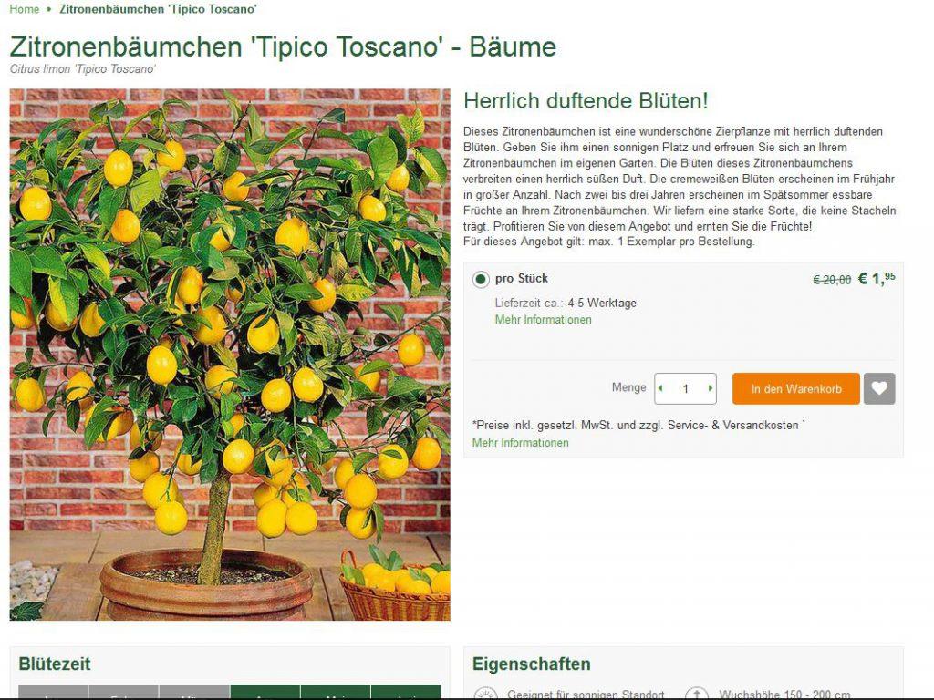 Bild Webshop bakker.com: Zitronenbäumchen Tipico Toscano